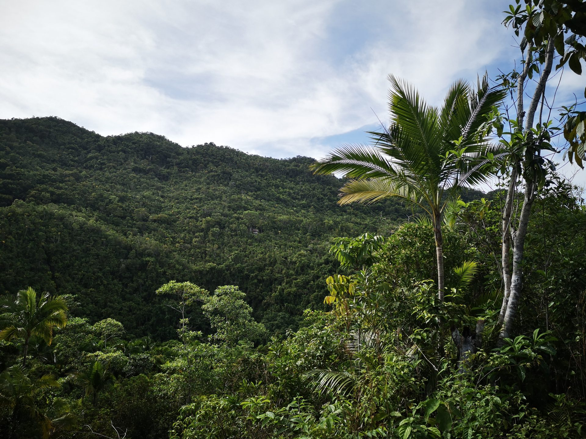 Bohol – Loboc River & Rajah Sikatuna National Park